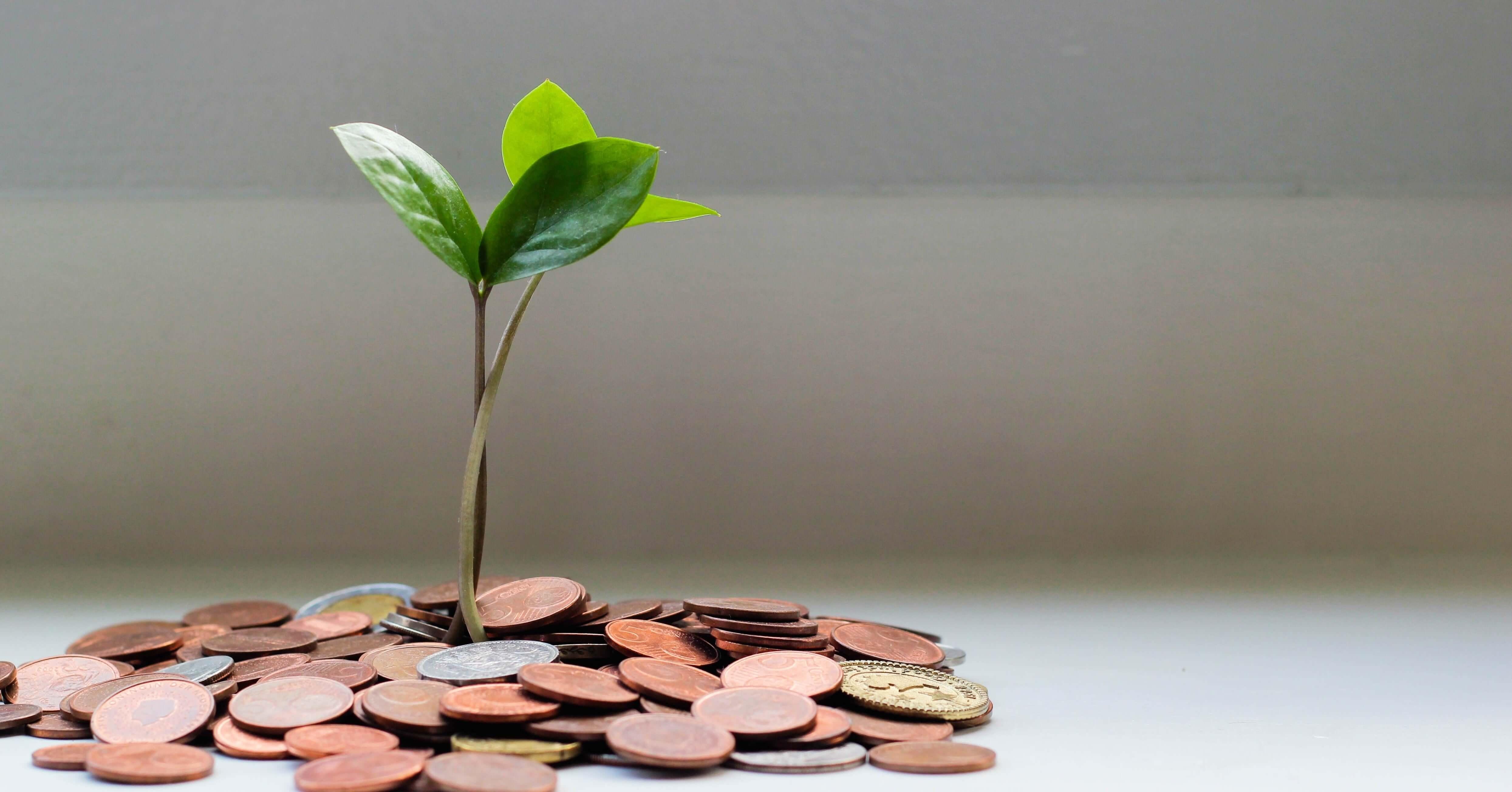 Top Dividend Yield: quais são as empresas brasileiras que mais pagam dividendos?