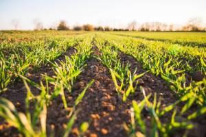 Agricultura Unsplash