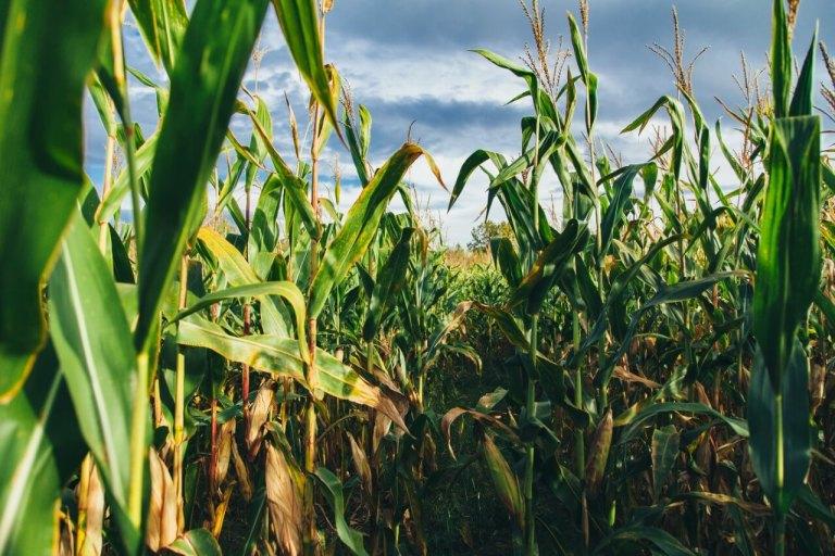 Setor agro Unsplash