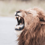 Leão - Unsplash