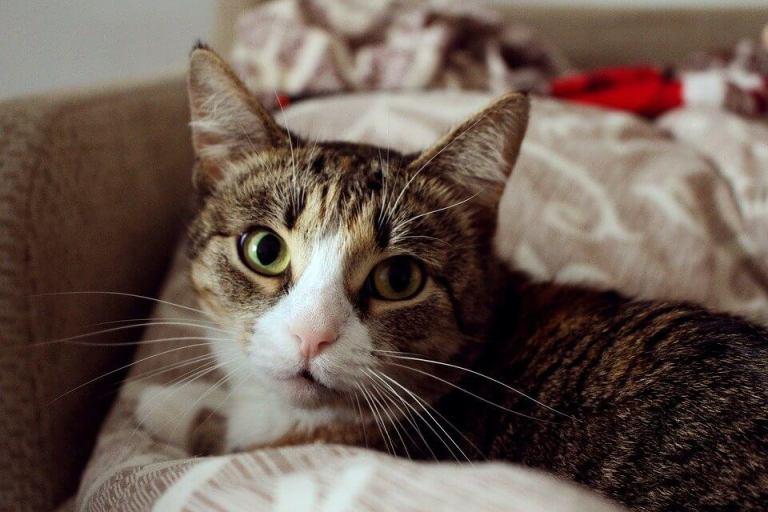 Gato - Pixabay