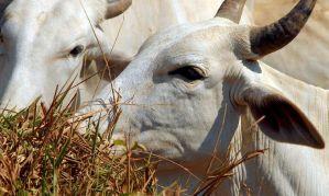 carne bovina Agencia Brasil